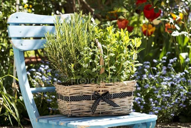 Vista diurna di un cesto di erbe su una sedia da giardino — Foto stock