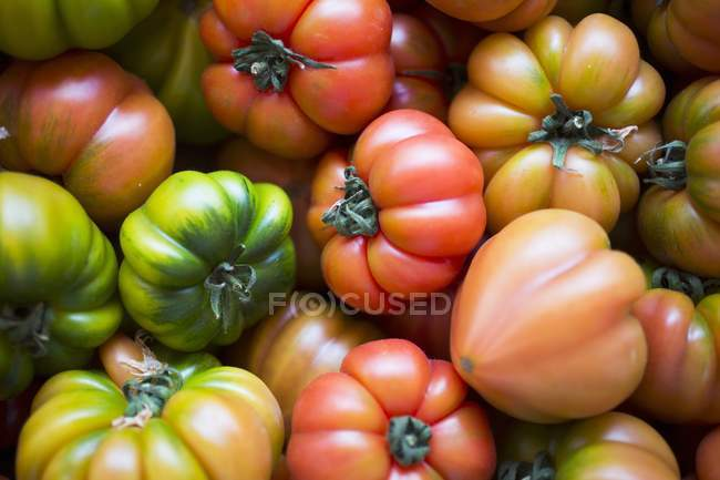 Various beefsteak tomatoes — Stock Photo