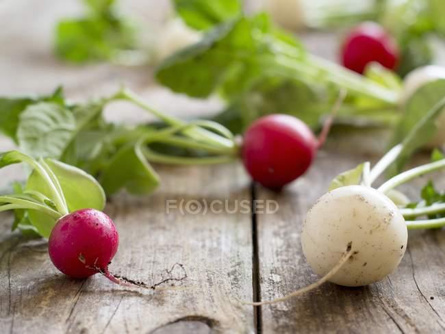 Rabanetes vermelhos e brancos — Fotografia de Stock