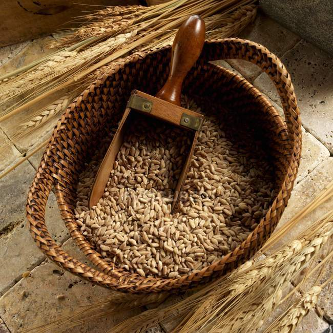Farro in basket with a scoop — Stock Photo