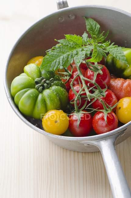 Различные свежие помидоры — стоковое фото