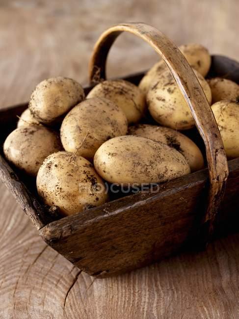 Freshly harvested potatoes — Stock Photo