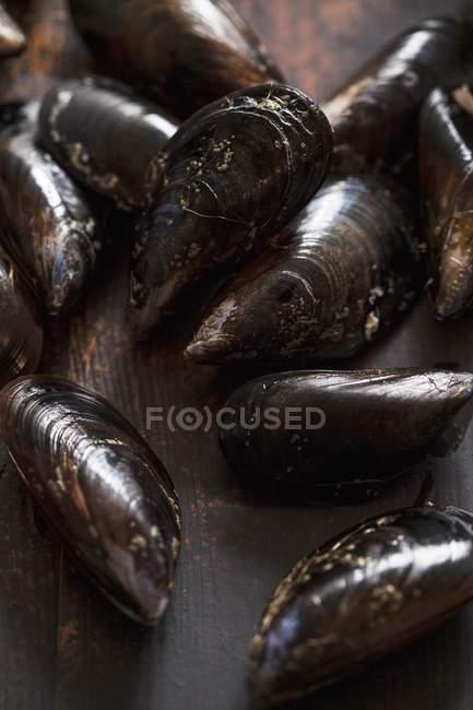 Avec des coquilles de moules fraîches — Photo de stock