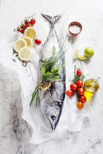 Fresh whole tuna fish — Stock Photo