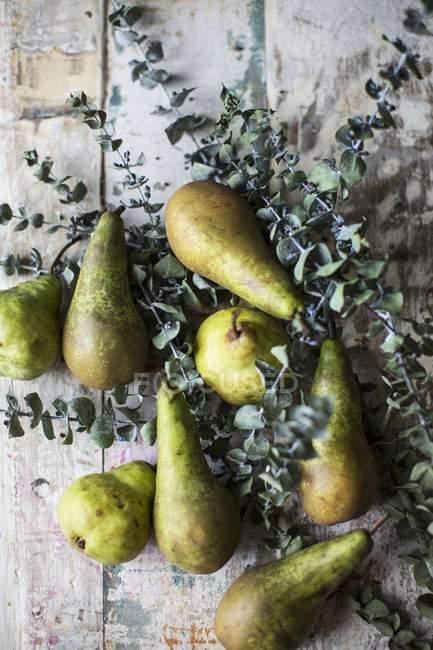 Pears and eucalyptus sprigs — Stock Photo