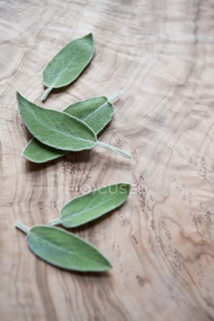 Hojas de Salvia frescas - foto de stock