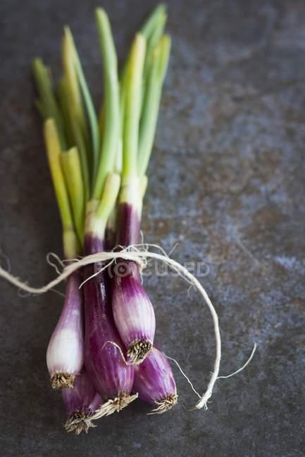 Органический красный лук — стоковое фото