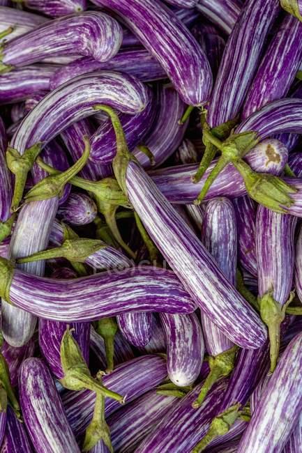 Purple and white aubergines — Stock Photo