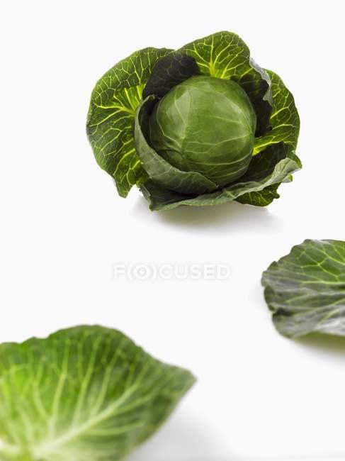 Свежий савойской капусты и листья — стоковое фото