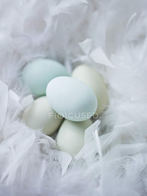 Крупним планом подання блакитні яйця в гнізді м'які пір'я — стокове фото