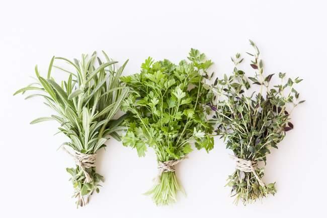 Cachos de ervas frescas — Fotografia de Stock