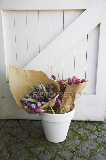 Tulipanes rosados y morados envueltos en papel en una maceta blanca cerca de la puerta de madera - foto de stock