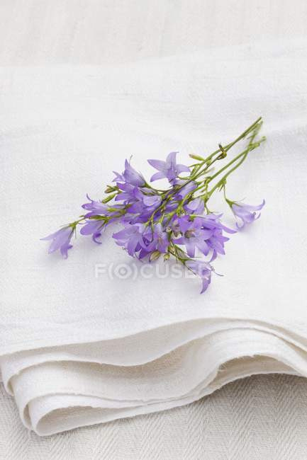 Closeup view of Rampion flowers on a white linen cloth — Stock Photo