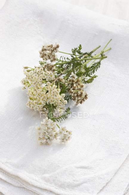 Возвышенный вид на свежие цветы ярро на белом льняном полотне — стоковое фото