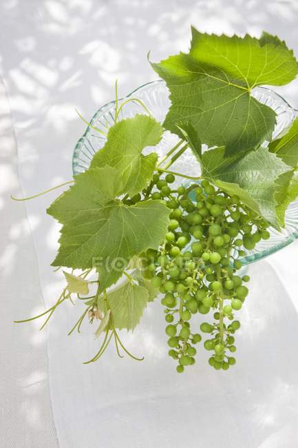 Vine leaves and green unripe grapes — Stock Photo