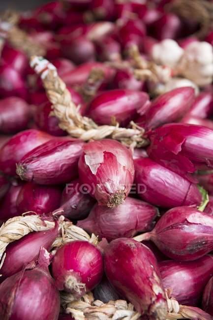 Alho e cebola roxa — Fotografia de Stock