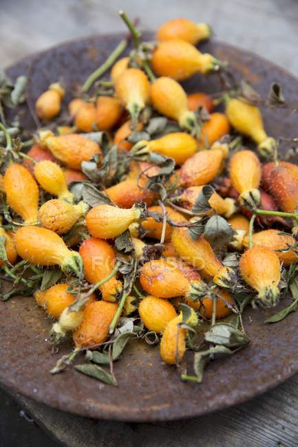 Closeup view of hairy, yellow and orange rose hips on a plate — Stock Photo