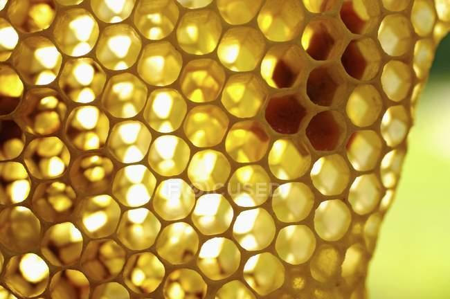Смачні Золотий меду — стокове фото