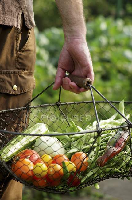 A man carrying freshly harvested vegetables in a wire basket from a garden outdoors — Stock Photo
