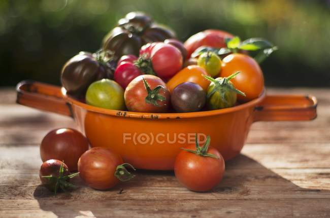 Fresh picked colorful tomatoes — Stock Photo