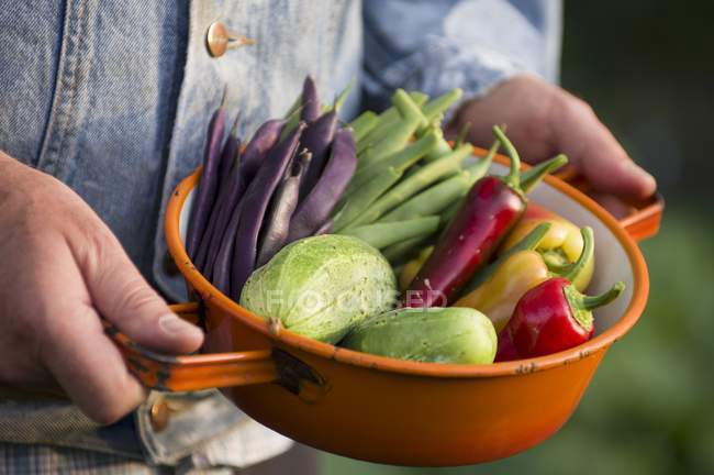 A man holding a sieve of freshly harvested vegetables from a garden — Stock Photo