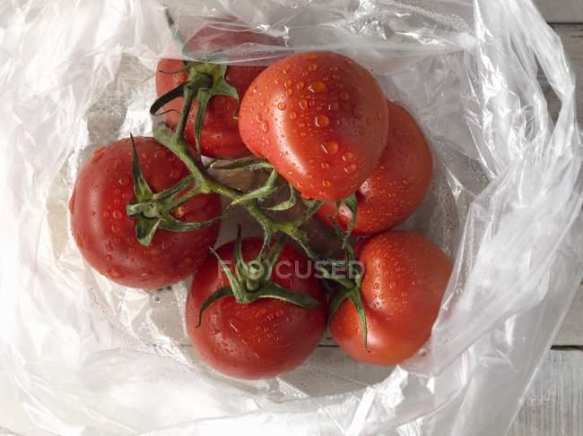 Freshly washed vine tomatoes — Stock Photo