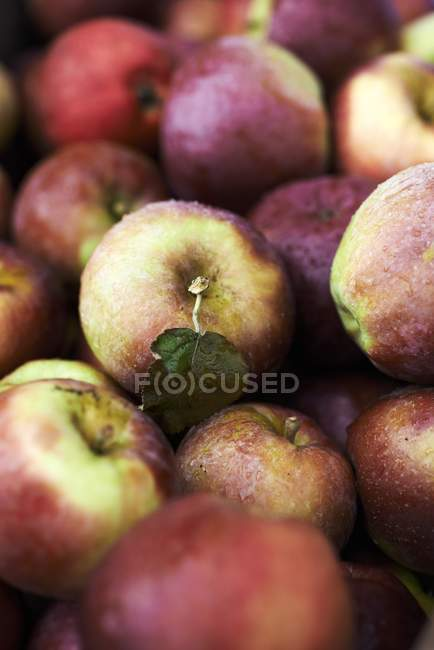 Organic fresh picked apples — Stock Photo