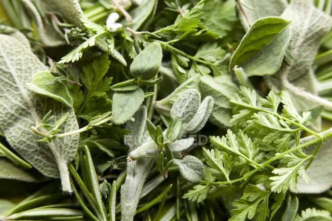 Vista de cerca de varias hierbas frescas - foto de stock