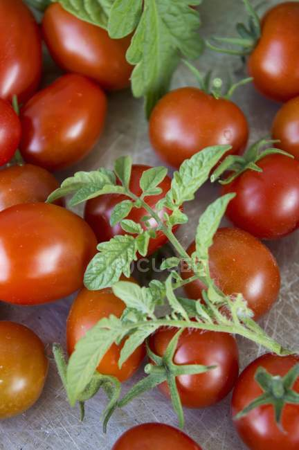 Fresh ripe tomatoes with leaves — Stock Photo