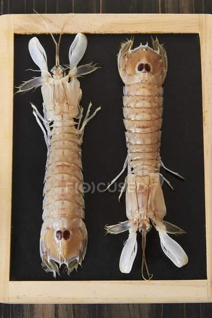 Vue de dessus de deux crabes mantis sur panneau noir — Photo de stock