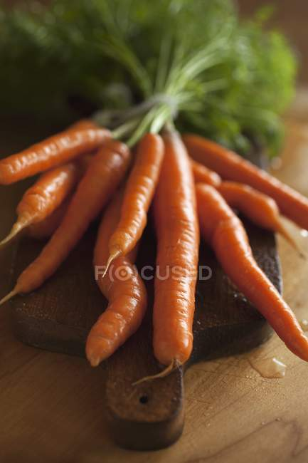 Fresh picked carrots — Stock Photo