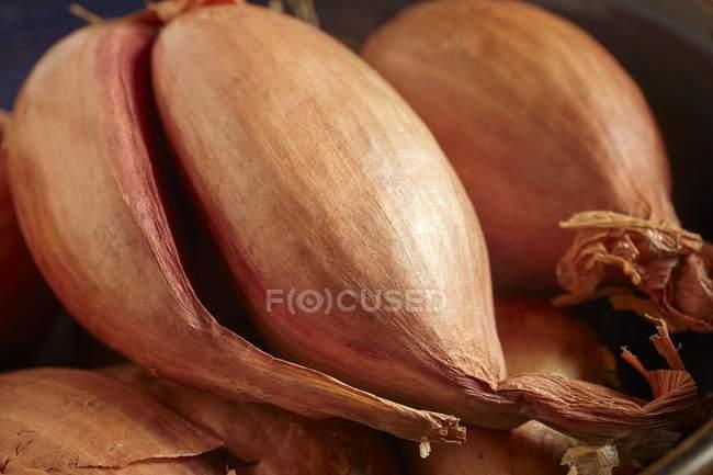 Chalotas maduras frescas — Fotografia de Stock