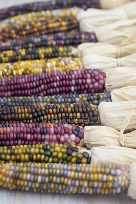 Mazorcas de maíz de colores varios - foto de stock