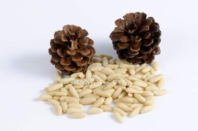 Кедрові горіхи і шишки — стокове фото