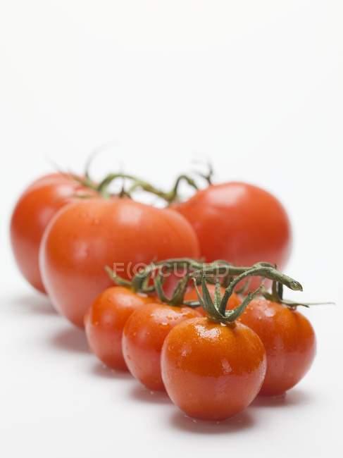 Tomates frescos lavados - foto de stock