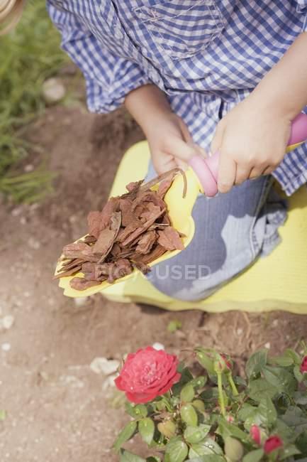 Child holding bark mulch on a shovel over rose bush — Stock Photo