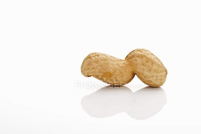Один арахіс в шкаралупі — стокове фото