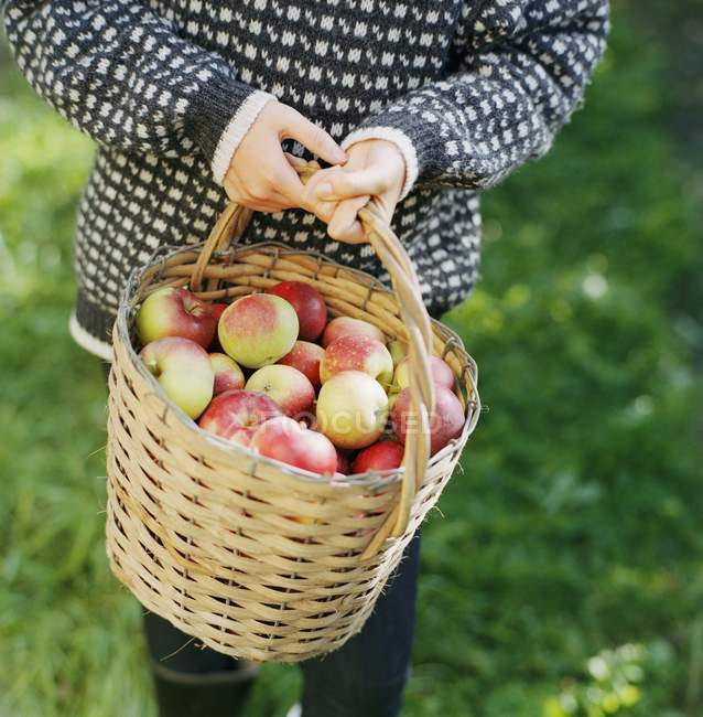Woman holding basket of apples — Stock Photo