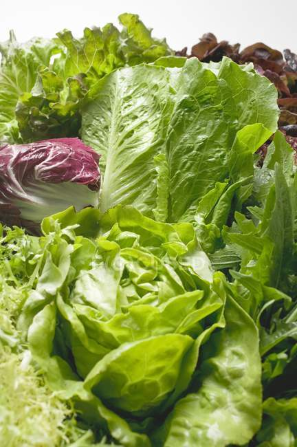 Fresh lettuces and salad vegetables — Stock Photo