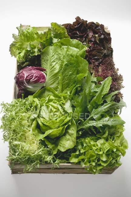 Свіже листя салату і салат в кошику — стокове фото