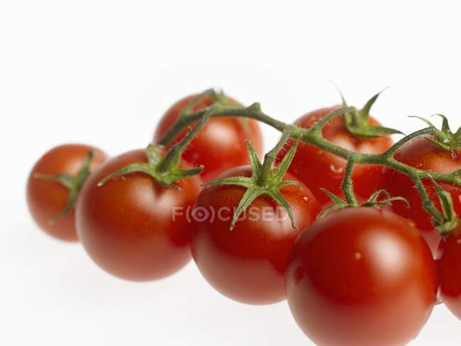 Cherry tomatoes on vine — Stock Photo