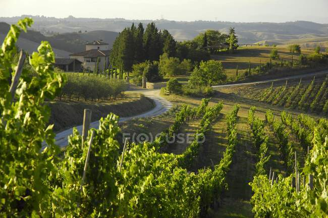 Daytime distant view of Villa Pillo Estate, Tuscany, Italy — Stock Photo