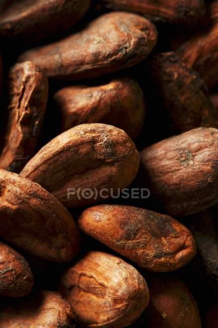 Cacao en grano en montón - foto de stock