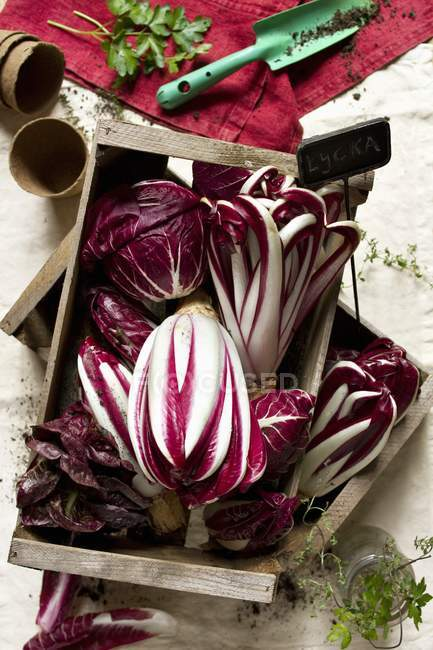 Different types of radicchio in wooden boxes — Stock Photo