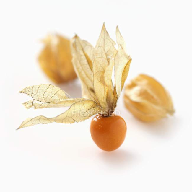 Ripe physalis berry with husk — Stock Photo