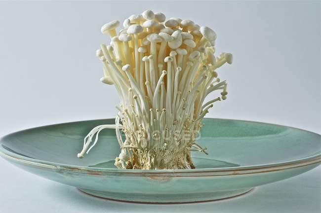 Enoki свіжі гриби на тарілку — стокове фото