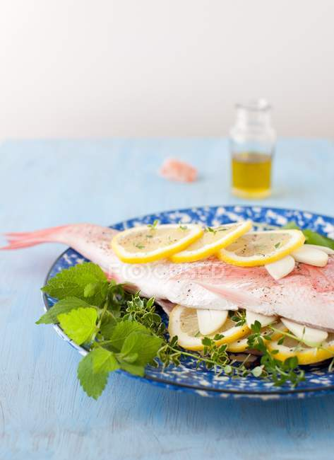 Fresh Red Snapper — Stock Photo