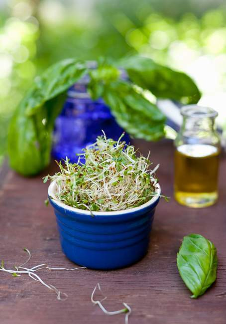 Pot with fresh Sprouts — Stock Photo