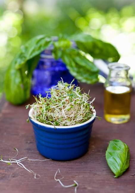 Pot avec pousses fraîches — Photo de stock