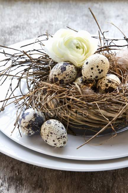 Closeup view of quail eggs in a nest with a flower — Stock Photo